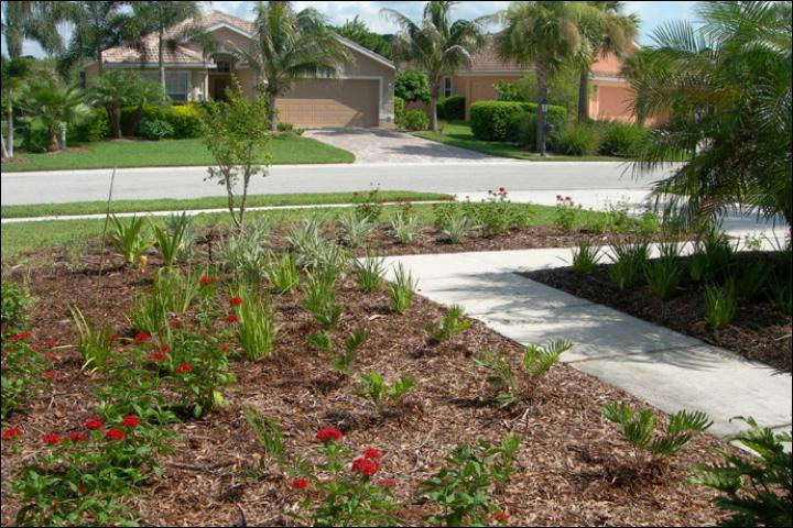 Figure 9.AFTER Florida-Friendly landscape renovation -- June 2009. The new landscape includes a larger plant bed with a variety of plants, including Pentas, Coontie, Salvia, and Flax Lily. A combination of plant colors, textures, and shapes add visual appeal and also attract birds and butterflies.
