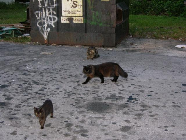 Figure 1. An example of a feral cat colony.
