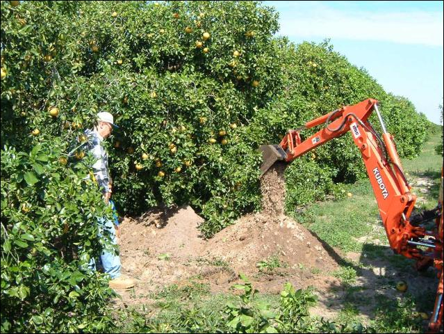 Figure 1.Opening a root system observation trench with a backhoe.