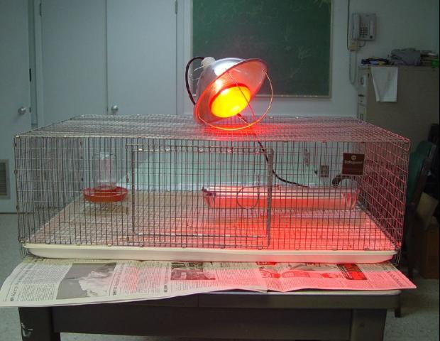 Figure 1.Wire brooder, light on.