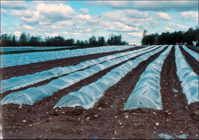 Figure 5.Commercial use of row covers in New England.