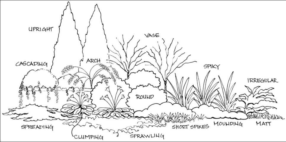 الشكل 7. شجيرة وأشكال الغطاء الأرضي.