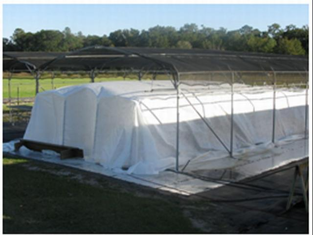 Figure 8.A tomato crop under a polypropylene frost cover outdoors in December, 2008, in Live Oak, FL.