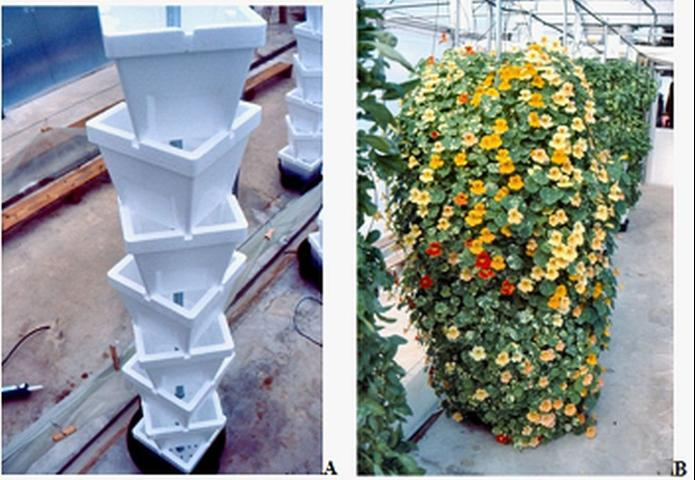 Figure 6.Verti-Gro® stacked pots (A) planted with nasturtium (B) in a vertical hydroponic system in Live Oak, FL, 2001.
