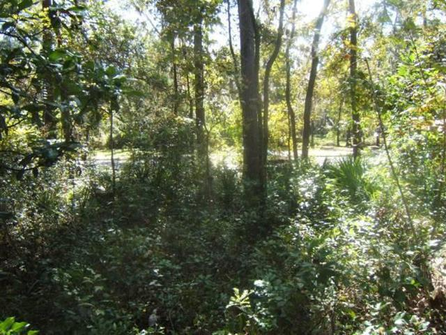 Figure 2.The edge of an urban forest remnant on the University of Florida campus. Note the densely vegetated understory with seedlings of mature overstory species (largely water oak, Quercus nigra, and vines). (Photo Credit: Dan Dawson)
