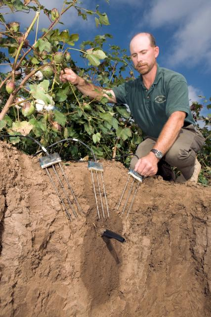 Figure 3.SDI placed deep in a cotton field allows for long lifetimes and avoids interference from tillage. Soil-water monitoring probes allow for measurement of soil moisture.