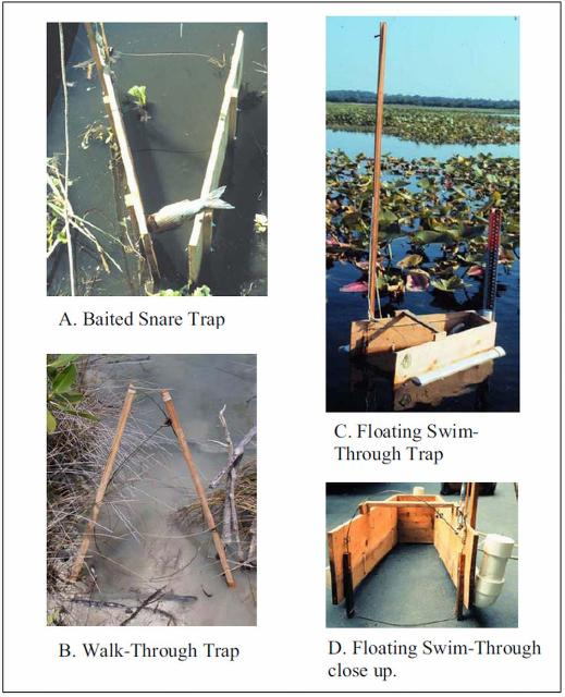 Figure 4. Examples of walk-through and swim-through snare traps.