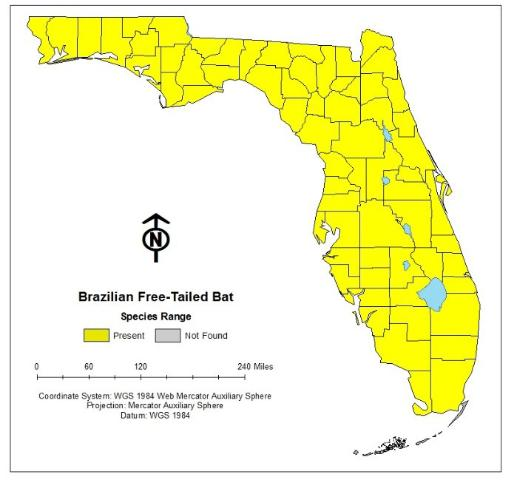 Figure 2. Brazilian free-tailed bats can be found in every county throughout Florida.